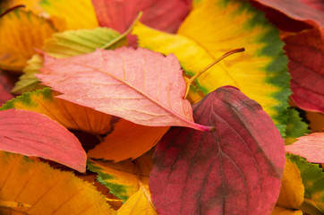 Group of colorful autumn leaves background