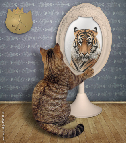 The funny cat views his reflection in the mirror in the room