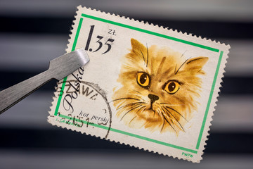 persian cat on a vintage post stamp