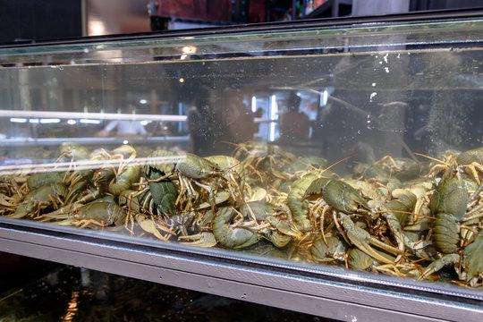 Live crayfish in the aquarium in the store