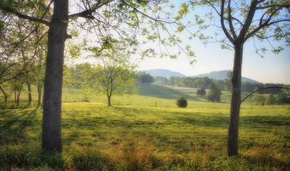 """""""Places for a Hammock"""" dreamy summer morning in the hills of the Blue Ridge Mountains Zen Duder Americana Landscapes Series"""