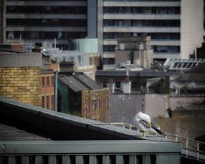 Rooftop in Belfast, UK