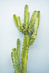 Boho Chic Plants