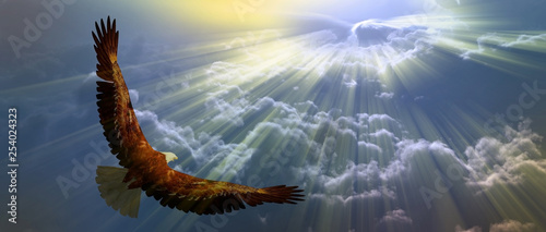 Wall mural Eagle in the sky