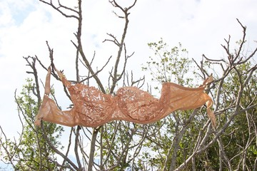 Closeup of woman's peach color bra hanging from the branches of a naked tree at the forest in a park background view of trees with green leaves and sky
