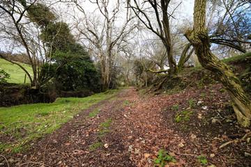 Woods in South West Devon