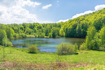 beautiful scenery near the lake among beech forest. wonderful springtime weather with fluffy clouds on the sky