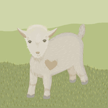 Baby goat with heart