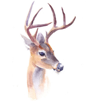 Watercolor deer forest animal illustration isolated on white background
