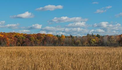autumn landscape with  field and blue sky