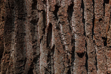 Textured bark of a tree. Scratches, cracks, dust, moss. Can be used as background for lettering or design.