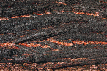 Textured texture of burnt bark of a tree. Scratches, cracks, dust, moss. Forest fire. Can be used as background for lettering or design.