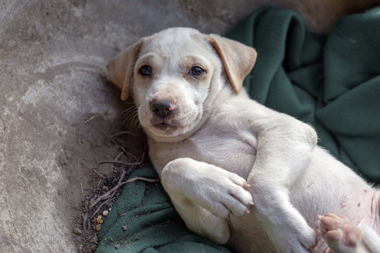 sad eyes of stay new born puppy in street life