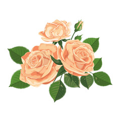 Watercolor illustration of yellow roses. Roses, buds, leaves and flowers isolated on white.