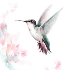 Watercolor Bird Hummingbird Flying Around Pink Flowers Hand Drawn Summer Garden Illustration Set isolated on white background