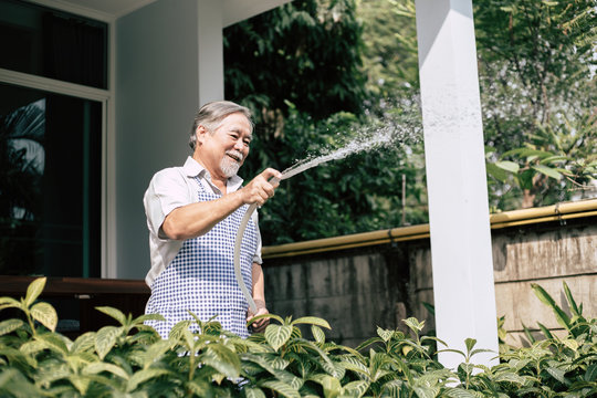 Senior man plant a tree at home