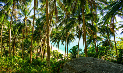 (selective focus) Stunning view of a paradisiacal beach seen through a rich and green vegetation of palm trees with white sand, people sunbathing and turquoise clear water. Surin Beach, Thailand. Wall mural