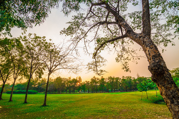 Sunset at city public park with green tree and meadow