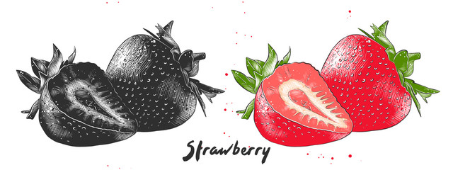 Vector engraved style illustration for posters, decoration, packaging and print. Hand drawn sketch of strawberry in monochrome and colorful. Detailed vegetarian food drawing.
