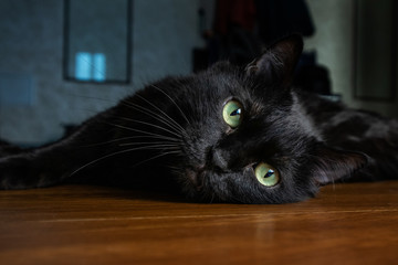 Portrait of a black mongrel cat with green eyes.