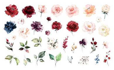 Set watercolor elements of roses collection garden red, burgundy flowers, leaves, branches, Botanic  illustration isolated on white background.   Wall mural