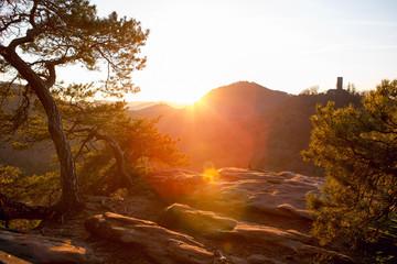 Sunrise sunset palatine forrest germany