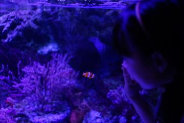 水族館の魚やペンギン