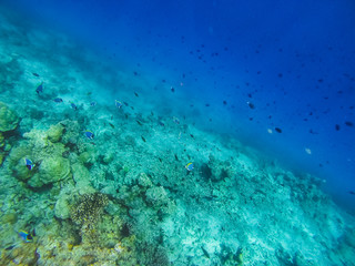 Diving in the Maldives with corals and fish