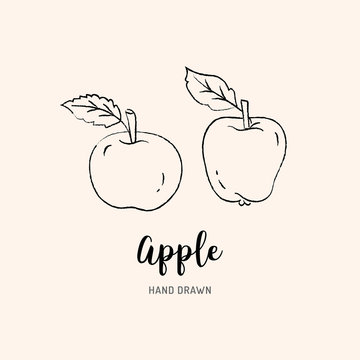 Apple drawing Vector hand drawn apples. Sketch of apples on white background, Vector isolated icons set
