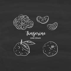 Tangerine fruit drawing Vector hand drawn mandarin. Sketch of tangerines with chalk on a blackboard, Vector isolated icons set