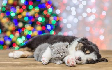 Sleepy Australian shepherd puppy embracing baby kitten with Christmas tree on background