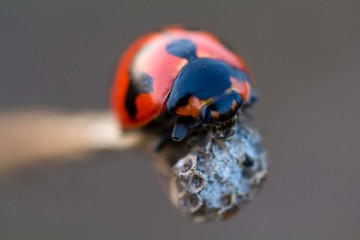 nature macro photography. namely thek art of taking pictures according to existing circumstances.