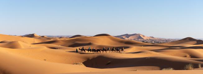 Dromadaires dans le désert du Sahara au Maroc