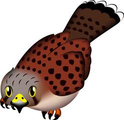 鳥・猛禽 チョウゲンボウ