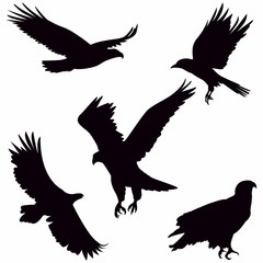 Eagle Silhouette on white background - Vector