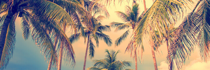 Foto op Canvas Palm boom Panoramic palm trees tropical background, vintage style process banner