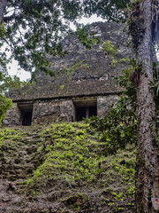 Temple Number 54of the nation's most significant Mayan city of Tikal Park, Guatemala