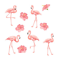 Tuinposter Flamingo Tropical birds and flowers collection. Pink flamingos set. Hibiscus flowers kit. Fashion tropic bundle. Elements for invitation card and your template design. Vector illustration.