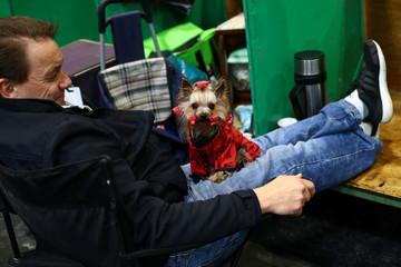 A Yorkshire Terrier rests with its owner during the final day of the Crufts Dog Show in Birmingham