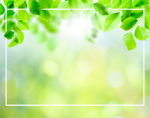 green leaves background and layout