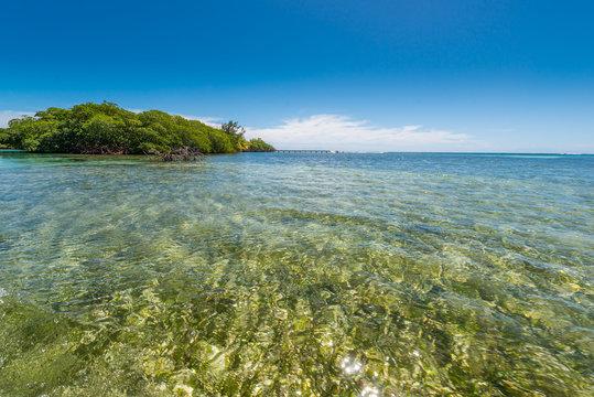 Meeresboden bei Punta Gorda auf Roatan