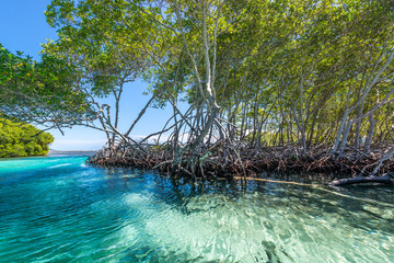 Punta Gorda Mangrovenwald