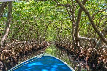 Bootfahrt durch Mangroventunnel in Punta Gorda auf Roatan.
