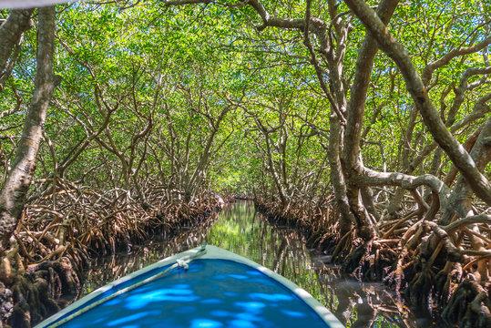 Bootsfahrt durch Mangroventunnel in Punta Gorda auf Roatan.
