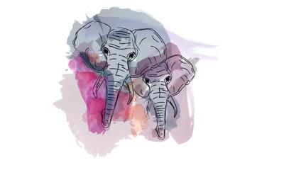 Foto auf AluDibond Aquarell Schädel elephant water color animal