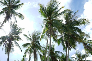 Background of Coconut trees along Siquijor Island, Philippines