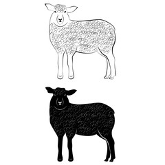 Sheep silhouette and contour