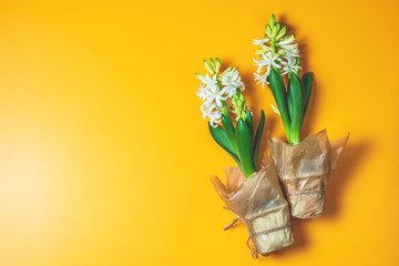 Two white hyacinths on yellow surface background