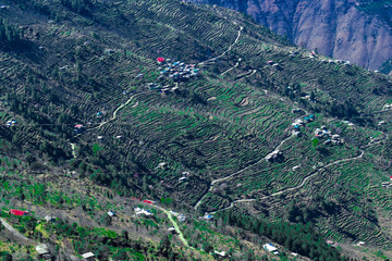 Cultivated Ladder Pattern Fields in Hills of Himachal Pradesh india