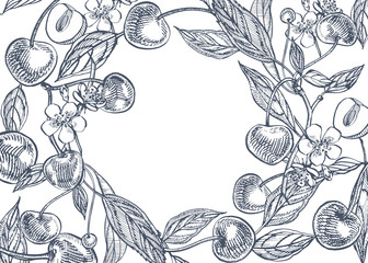 Cherry set. Hand drawn berry isolated on white background. Summer fruit engraved style illustration. Great for label, poster, print.